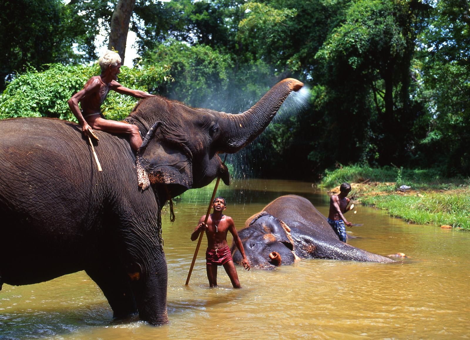 Ausflug zu Elefanten Sri Lanka - Lanka Princess